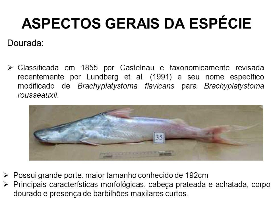 ASPECTOS GERAIS DA ESPÉCIE Dourada: Classificada em 1855 por Castelnau e taxonomicamente revisada recentemente por Lundberg et al. (1991) e seu nome e