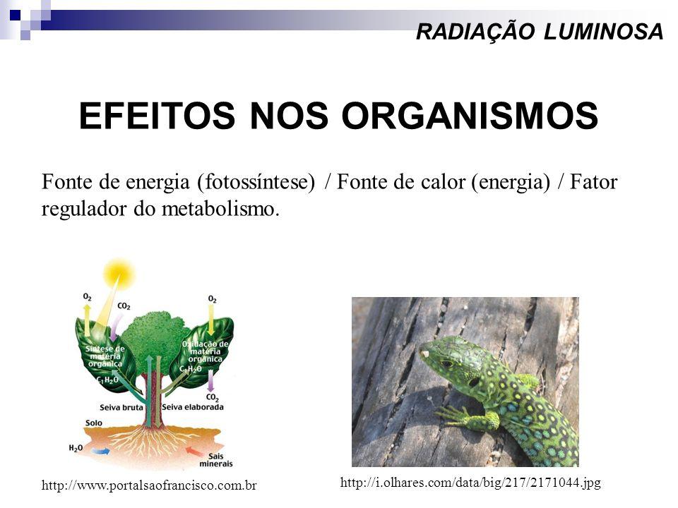 EFEITOS NOS ORGANISMOS RADIAÇÃO LUMINOSA Fonte de energia (fotossíntese) / Fonte de calor (energia) / Fator regulador do metabolismo. http://www.porta