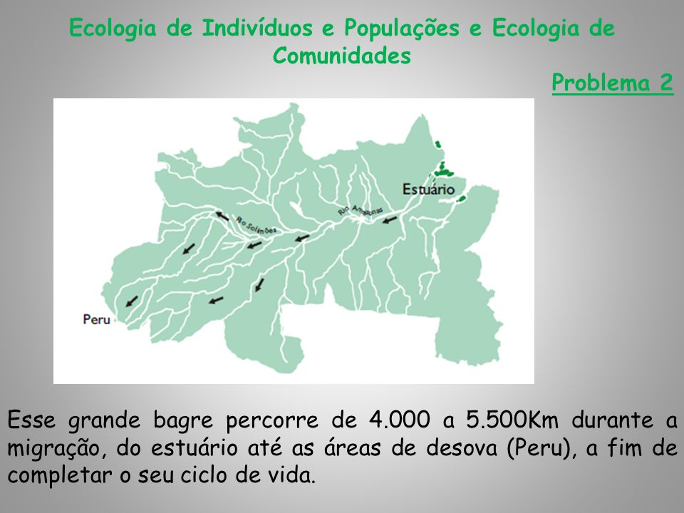 Ecologia de Indivíduos e Populações e Ecologia de Comunidades Problema 2 Esse grande bagre percorre de 4.000 a 5.500Km durante a migração, do estuário