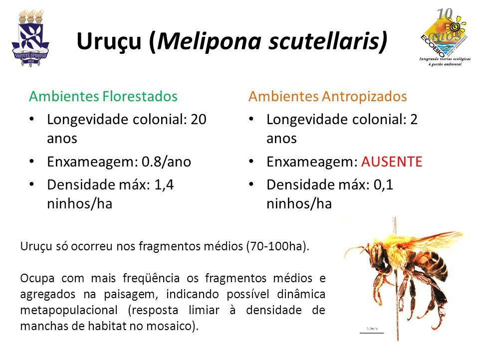 Jataí (Tetragonisca angustula) Ambientes Florestados Longevidade colonial: 3 anos Enxameagem: 1,5/ano Densidade máx: 1,1 ninhos/ha (p.