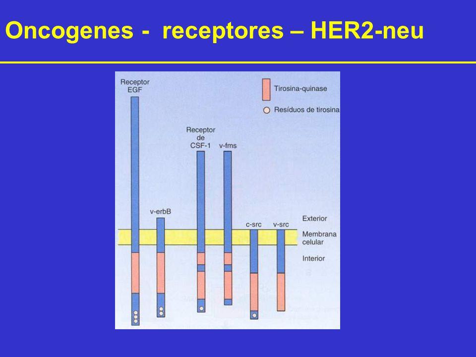 Oncogenes - receptores – HER2-neu