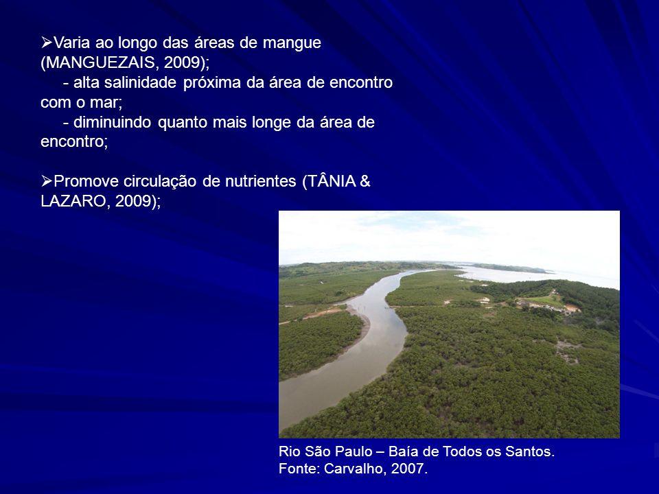 A salinidade vai determinar a zonação do manguezal (MANGUEZAIS, 2009); Excluem a possibilidade de outra vegetação dominar o ambiente (BERGSON, 2009); Margem esquerda do Rio São Paulo.