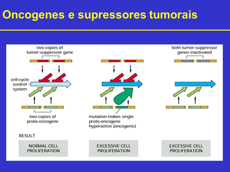 Oncogenes e supressores tumorais