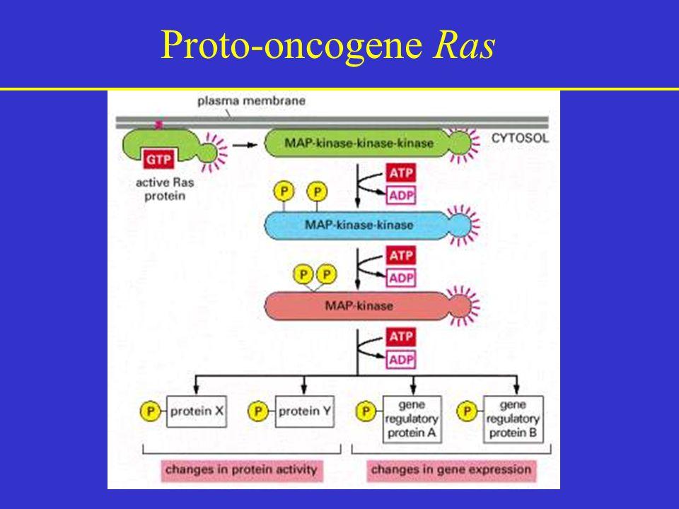 Proto-oncogene Ras
