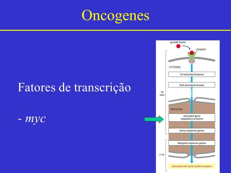 Oncogenes Fatores de transcrição - myc