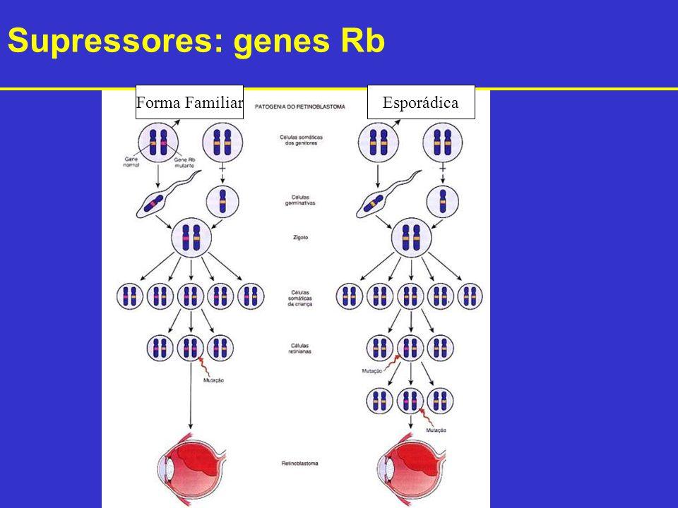 Forma FamiliarEsporádica Supressores: genes Rb