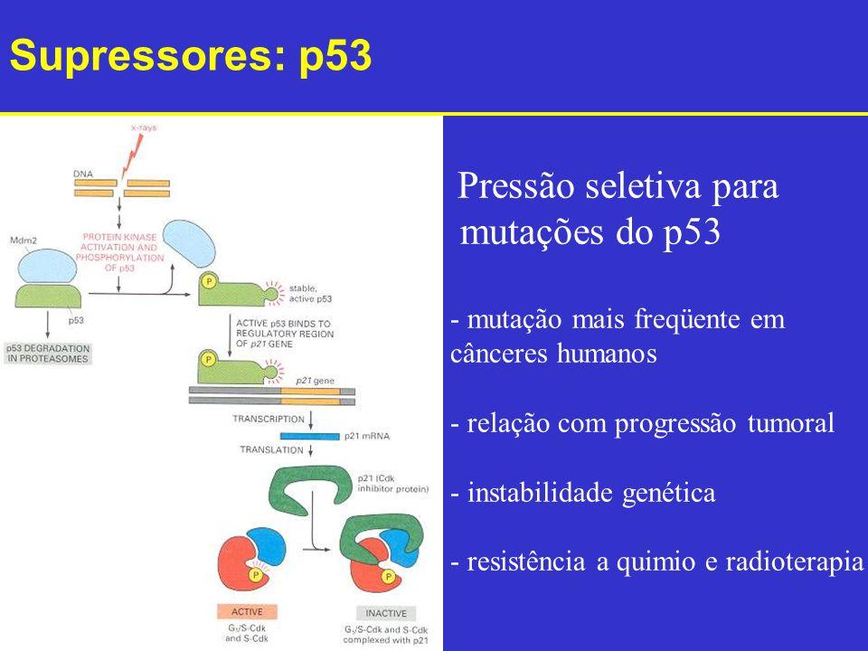 Pressão seletiva para mutações do p53 - mutação mais freqüente em cânceres humanos - relação com progressão tumoral - instabilidade genética - resistê