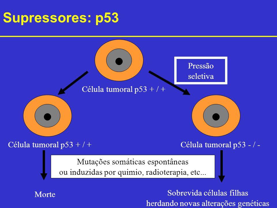 Supressores: p53 Célula tumoral p53 + / + Pressão seletiva Célula tumoral p53 + / +Célula tumoral p53 - / - Morte Sobrevida células filhas herdando no