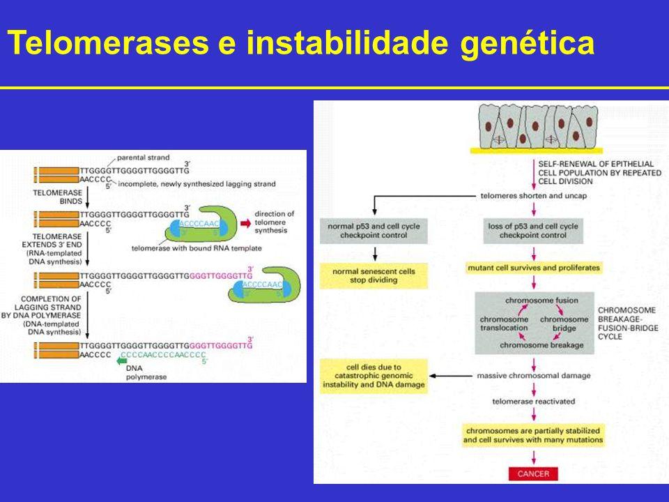 Telomerases e instabilidade genética