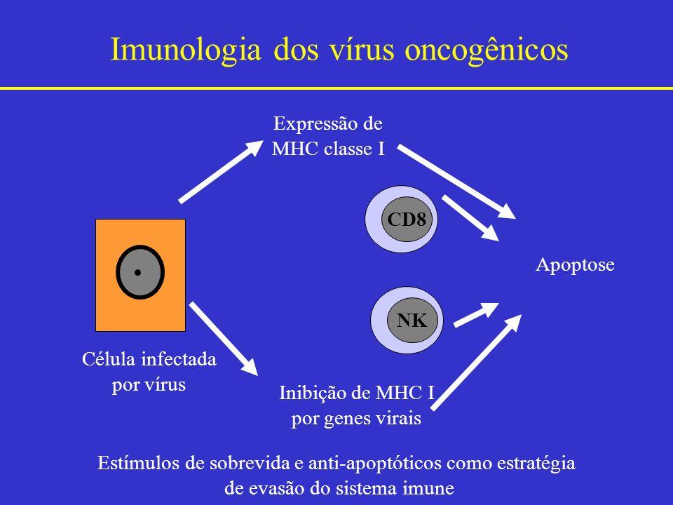 Imunologia dos vírus oncogênicos Estímulos de sobrevida e anti-apoptóticos como estratégia de evasão do sistema imune Célula infectada por vírus Expre