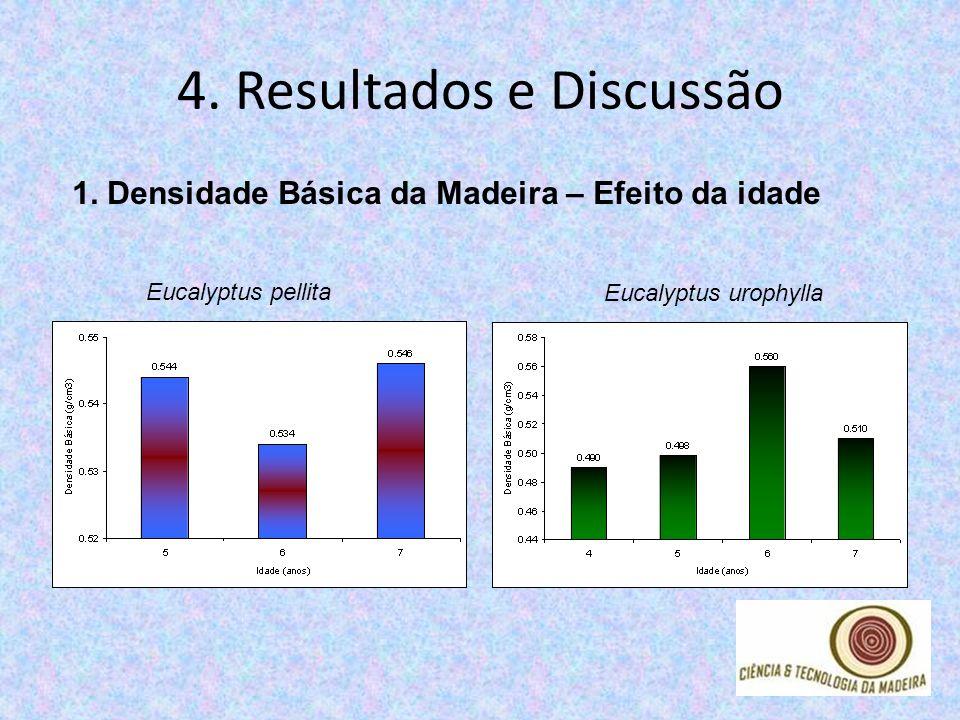 4. Resultados e Discussão 1. Densidade Básica da Madeira – Efeito da idade Eucalyptus pellita Eucalyptus urophylla