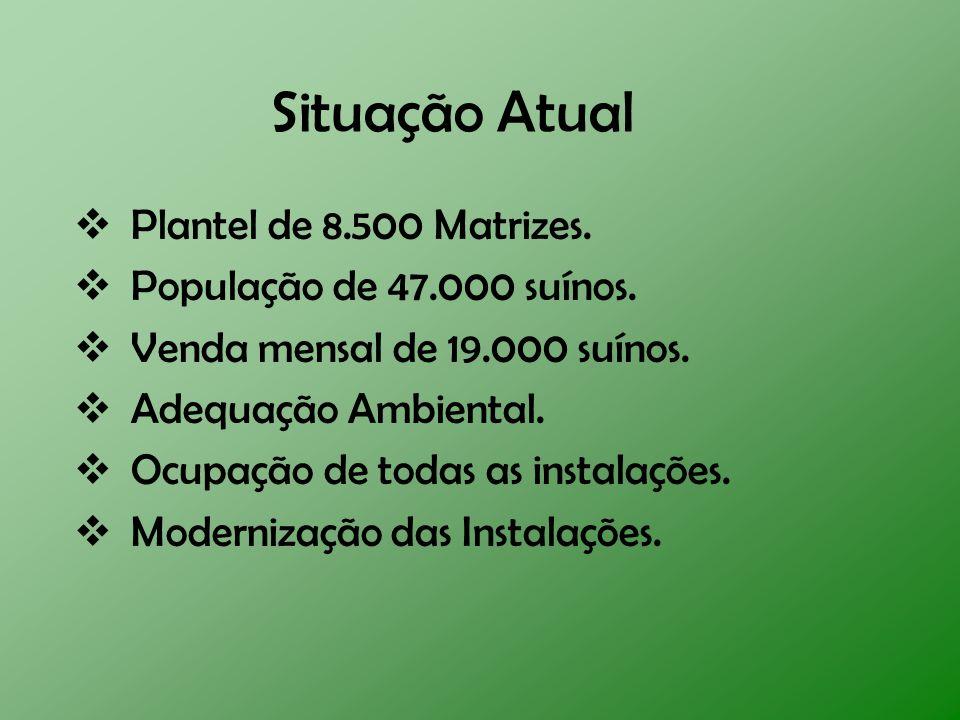 Videira-SC Email: pasqual@gsaoroque.com.br Fone: (49) 3533-0404