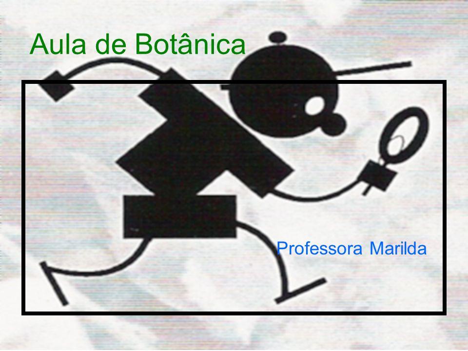 Aula de Botânica Professora Marilda