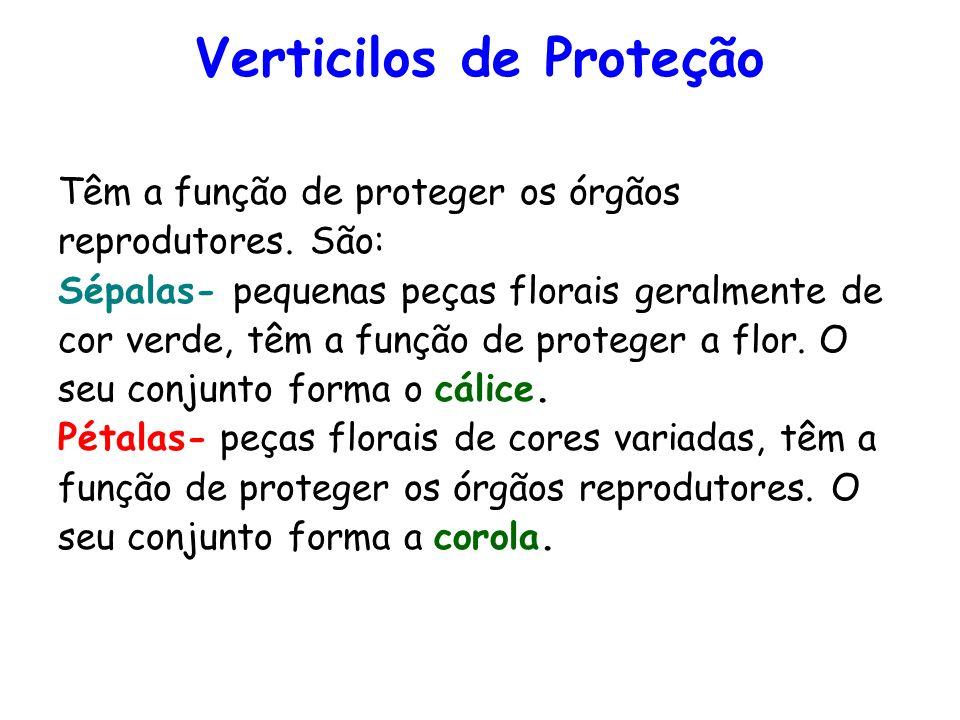 Verticilos de Proteção Têm a função de proteger os órgãos reprodutores. São: Sépalas- pequenas peças florais geralmente de cor verde, têm a função de
