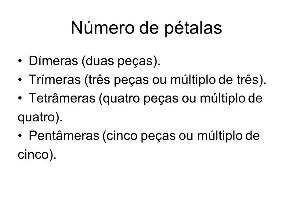 Número de pétalas Dímeras (duas peças). Trímeras (três peças ou múltiplo de três). Tetrâmeras (quatro peças ou múltiplo de quatro). Pentâmeras (cinco