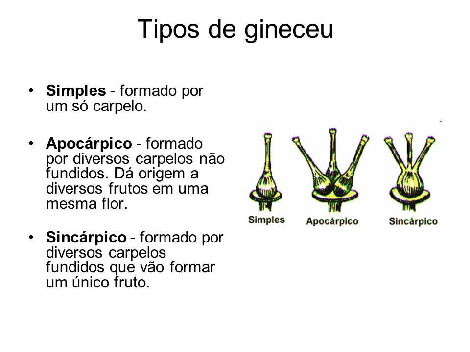 Tipos de gineceu Simples - formado por um só carpelo. Apocárpico - formado por diversos carpelos não fundidos. Dá origem a diversos frutos em uma mesm