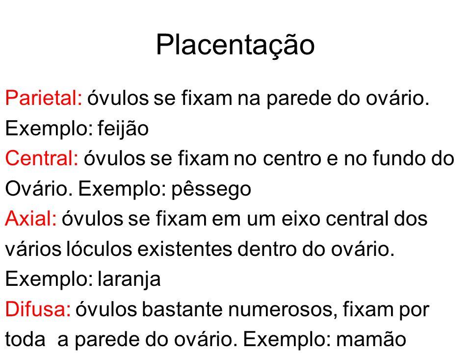 Placentação Parietal: óvulos se fixam na parede do ovário. Exemplo: feijão Central: óvulos se fixam no centro e no fundo do Ovário. Exemplo: pêssego A