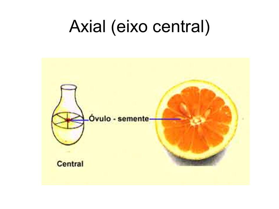 Axial (eixo central)
