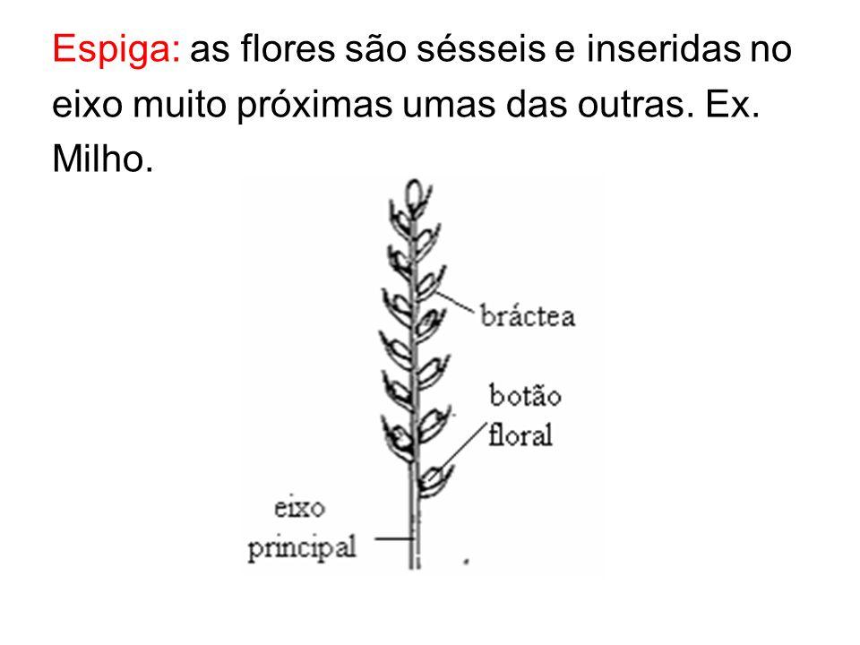Espiga: as flores são sésseis e inseridas no eixo muito próximas umas das outras. Ex. Milho.