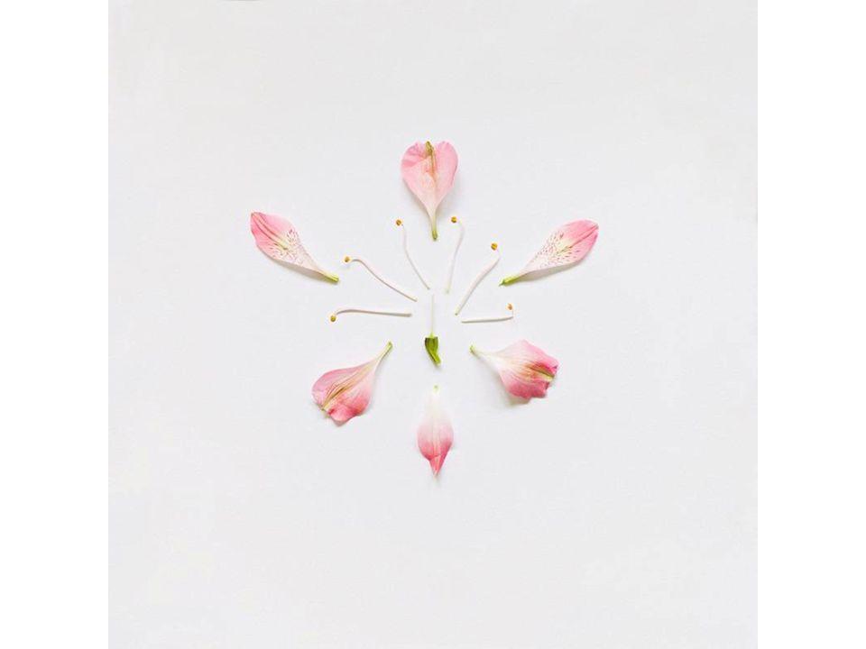 Perígina A flor pode ser perígina, quando as demais peças da flor fixam em torno de uma linha que corta o ovário na posição média.