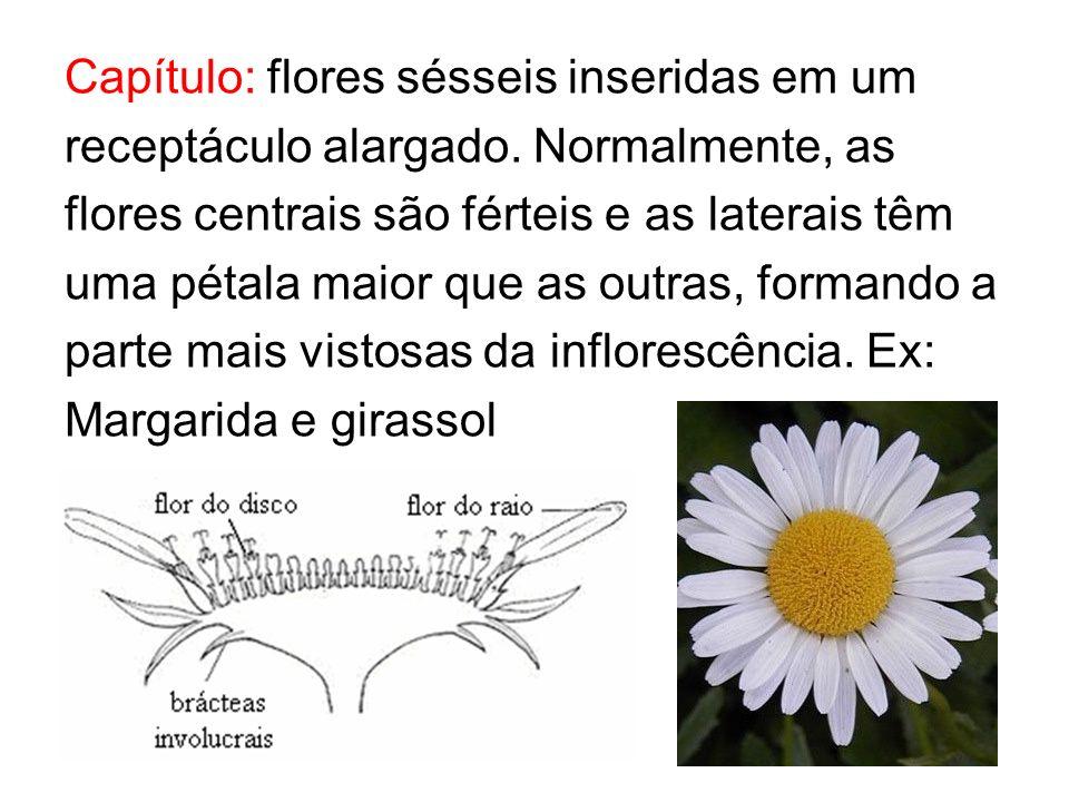 Capítulo: flores sésseis inseridas em um receptáculo alargado. Normalmente, as flores centrais são férteis e as laterais têm uma pétala maior que as o