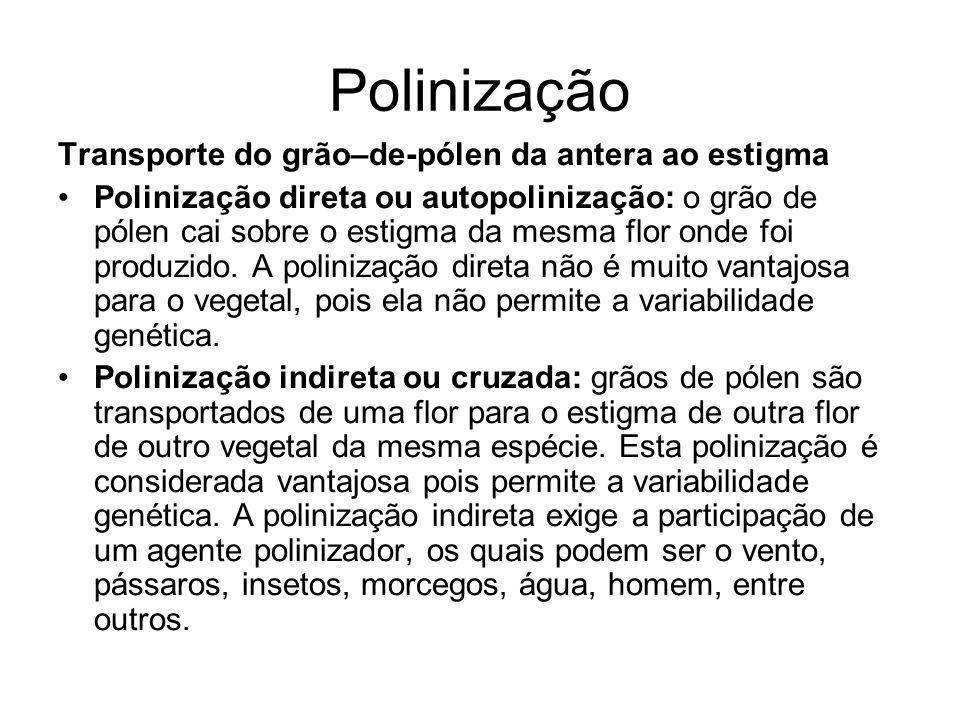 Polinização Transporte do grão–de-pólen da antera ao estigma Polinização direta ou autopolinização: o grão de pólen cai sobre o estigma da mesma flor