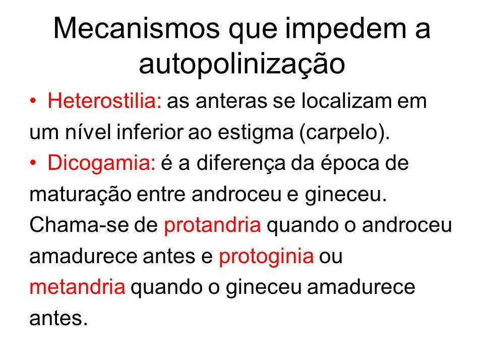 Mecanismos que impedem a autopolinização Heterostilia: as anteras se localizam em um nível inferior ao estigma (carpelo). Dicogamia: é a diferença da
