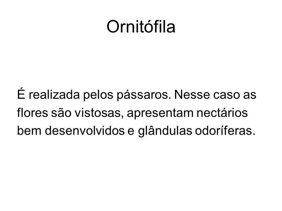 Ornitófila É realizada pelos pássaros. Nesse caso as flores são vistosas, apresentam nectários bem desenvolvidos e glândulas odoríferas.