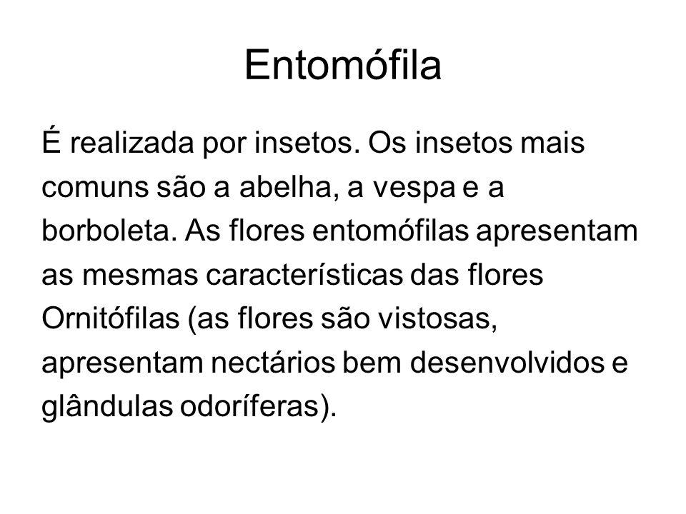 Entomófila É realizada por insetos. Os insetos mais comuns são a abelha, a vespa e a borboleta. As flores entomófilas apresentam as mesmas característ