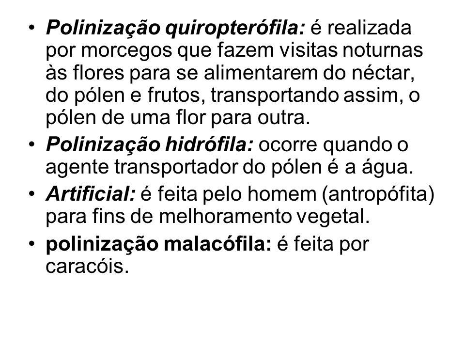 Polinização quiropterófila: é realizada por morcegos que fazem visitas noturnas às flores para se alimentarem do néctar, do pólen e frutos, transporta