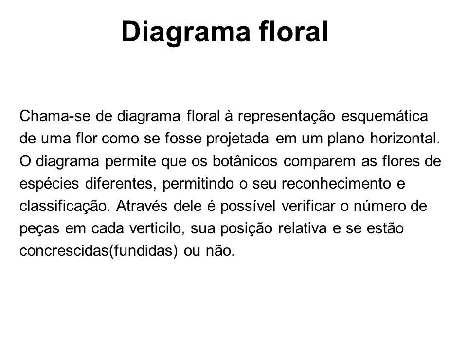 Diagrama floral Chama-se de diagrama floral à representação esquemática de uma flor como se fosse projetada em um plano horizontal. O diagrama permite