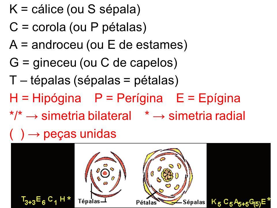 K = cálice (ou S sépala) C = corola (ou P pétalas) A = androceu (ou E de estames) G = gineceu (ou C de capelos) T – tépalas (sépalas = pétalas) H = Hi