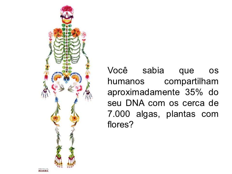 Você sabia que os humanos compartilham aproximadamente 35% do seu DNA com os cerca de 7.000 algas, plantas com flores?