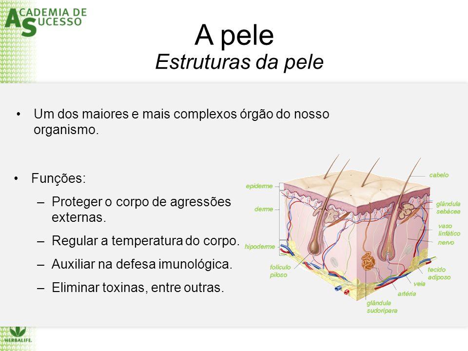 A pele Um dos maiores e mais complexos órgão do nosso organismo. Estruturas da pele Funções: –Proteger o corpo de agressões externas. –Regular a tempe