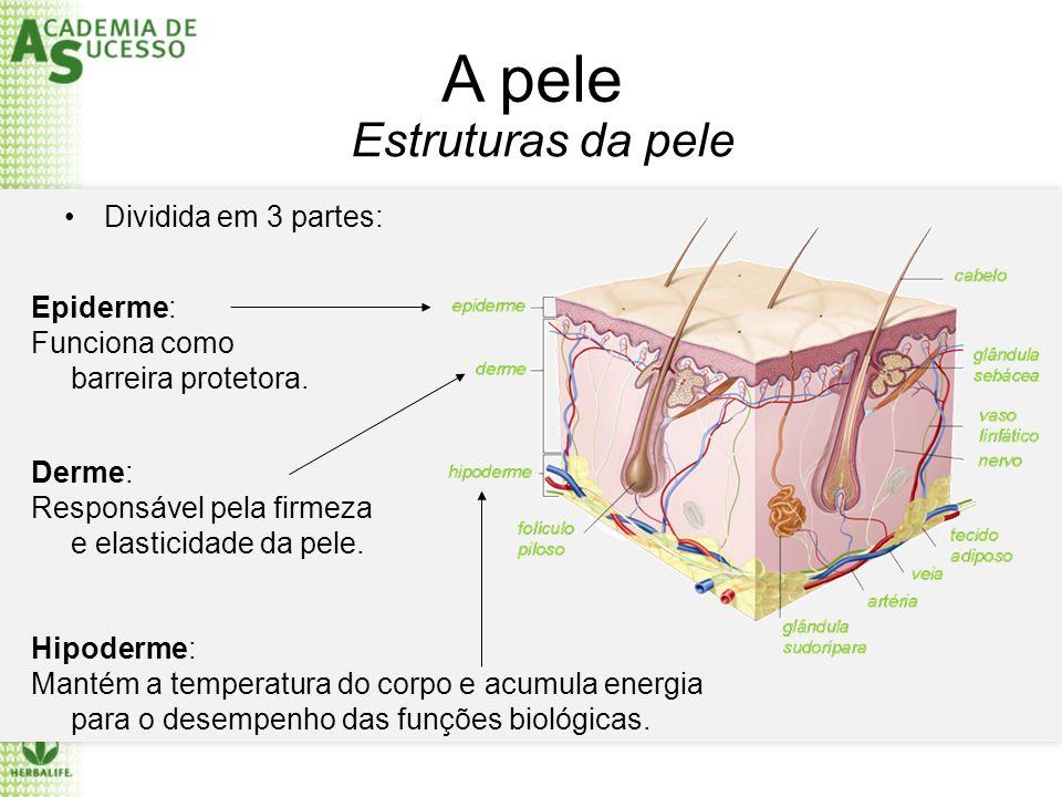 A pele Dividida em 3 partes: Epiderme: Funciona como barreira protetora. Derme: Responsável pela firmeza e elasticidade da pele. Hipoderme: Mantém a t