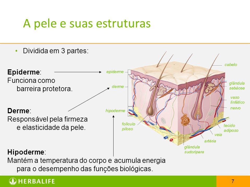 7 Dividida em 3 partes: Epiderme: Funciona como barreira protetora. Derme: Responsável pela firmeza e elasticidade da pele. Hipoderme: Mantém a temper