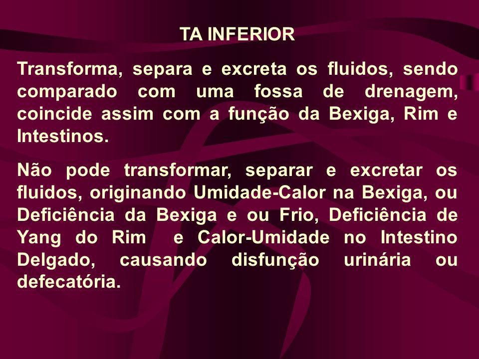 TA INFERIOR Transforma, separa e excreta os fluidos, sendo comparado com uma fossa de drenagem, coincide assim com a função da Bexiga, Rim e Intestinos.