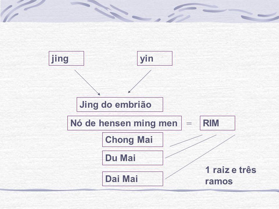 jingyin Jing do embrião Nó de hensen ming men Du Mai Chong Mai Dai Mai RIM = 1 raiz e três ramos