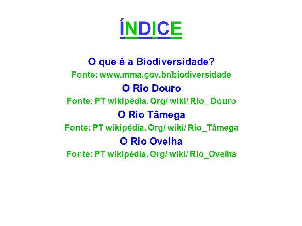 ÍNDICEÍNDICE O que é a Biodiversidade? Fonte: www.mma.gov.br/biodiversidade O Rio Douro Fonte: PT wikipédia. Org/ wiki/ Rio_ Douro O Rio Tâmega Fonte:
