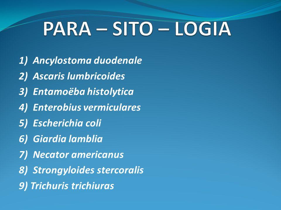 MAGISTRA ET DISCIPULAE Sempronia est magistra.Livia est discipula.