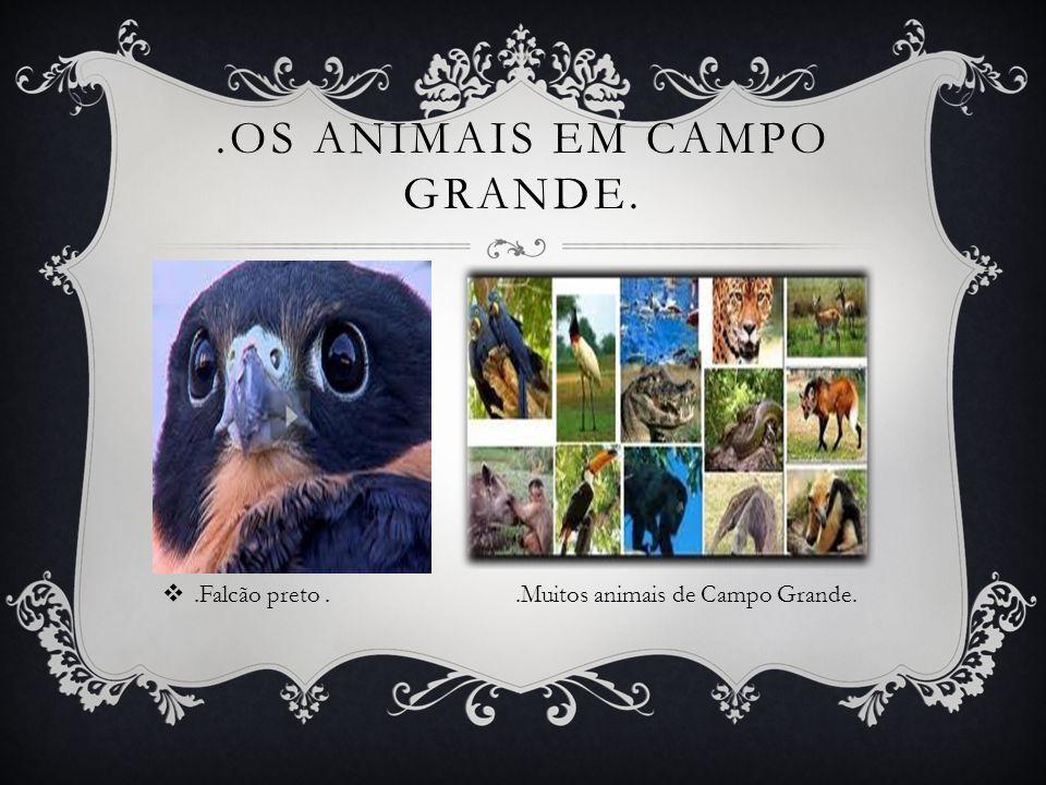 .OS ANIMAIS EM CAMPO GRANDE..Falcão preto..Muitos animais de Campo Grande.