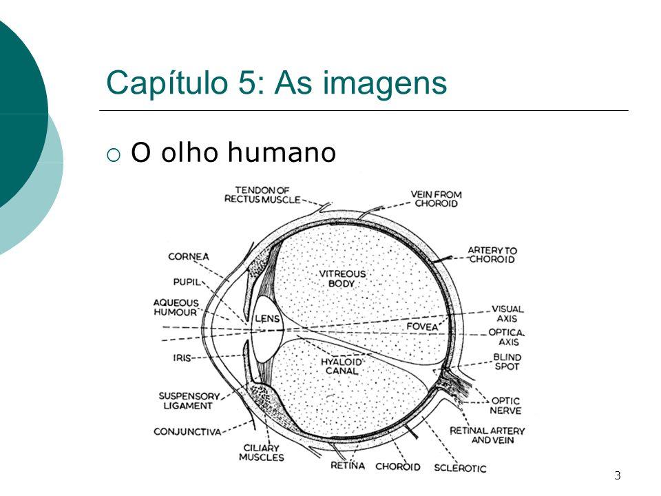 3 Capítulo 5: As imagens O olho humano