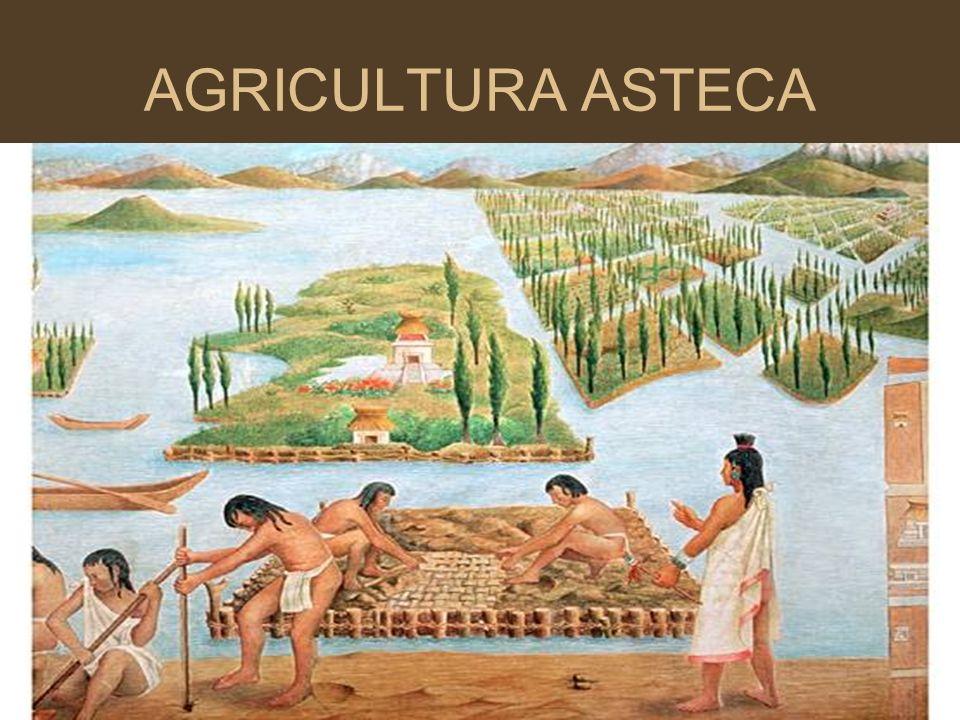 AGRICULTURA ASTECA Nesse processo de deslocamento, também é importante falar sobre o estabelecimento da agricultura como atividade econômica fundament