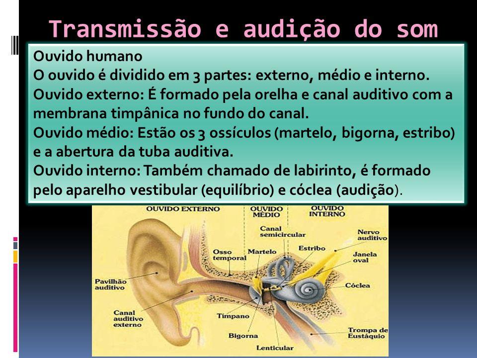 Transmissão e audição do som Ouvido humano O ouvido é dividido em 3 partes: externo, médio e interno. Ouvido externo: É formado pela orelha e canal au