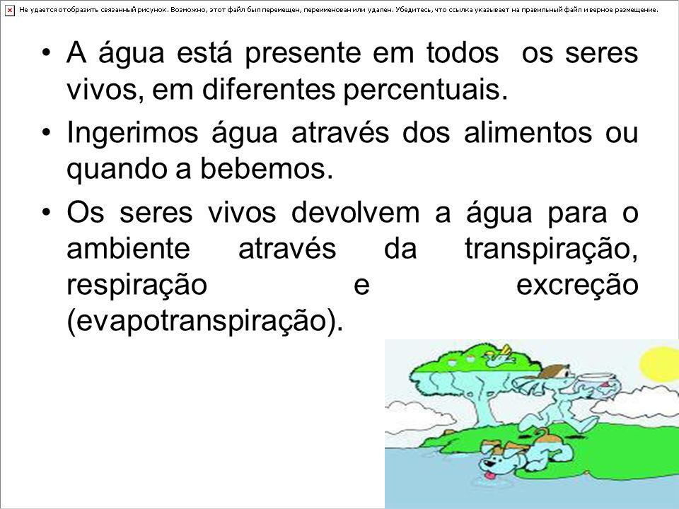Terrário O terrário reproduz as condições de um ambiente.