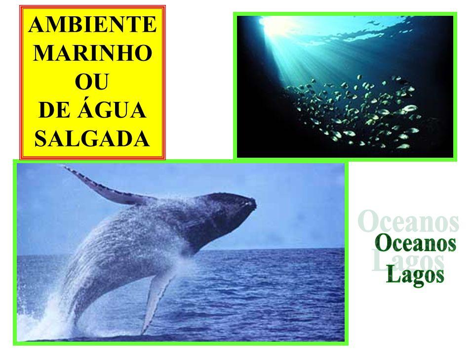 *Vai de 80 metros até 200 metros de profundidade *Mais respiração que fotossíntese *Pouquíssimas algas *Pouca luz