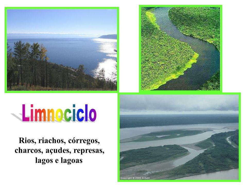 Rios, riachos, córregos, charcos, açudes, represas, lagos e lagoas