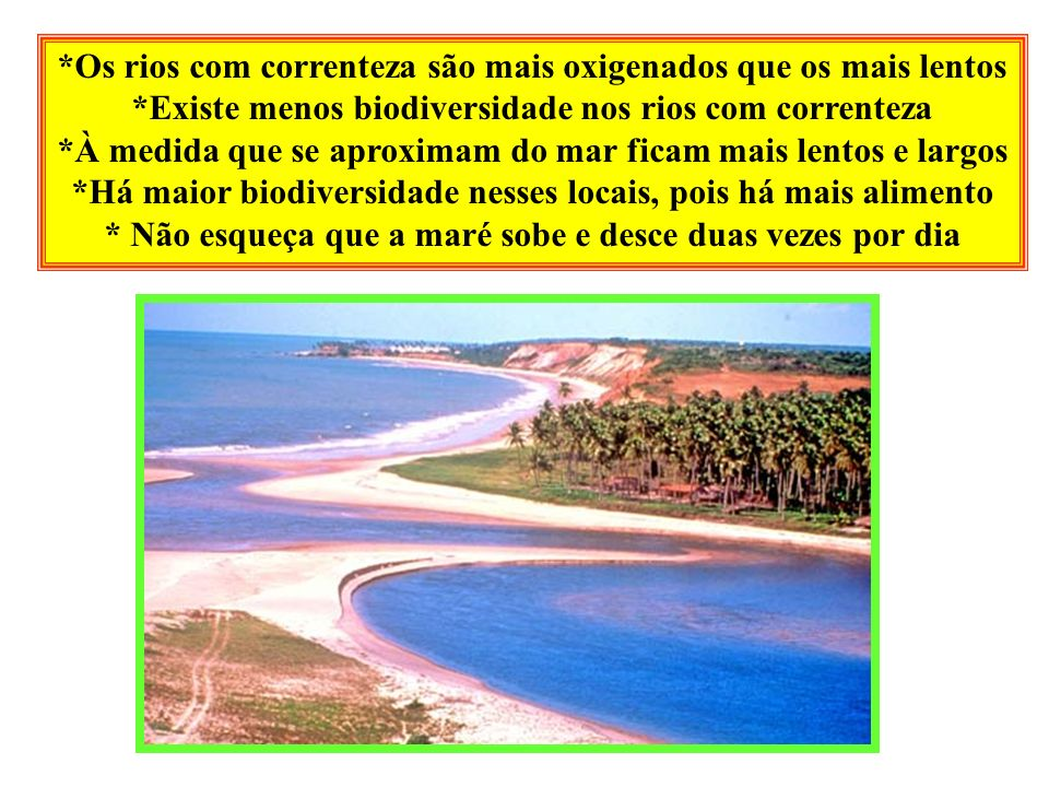 *Os rios com correnteza são mais oxigenados que os mais lentos *Existe menos biodiversidade nos rios com correnteza *À medida que se aproximam do mar