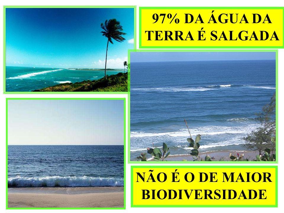 97% DA ÁGUA DA TERRA É SALGADA NÃO É O DE MAIOR BIODIVERSIDADE