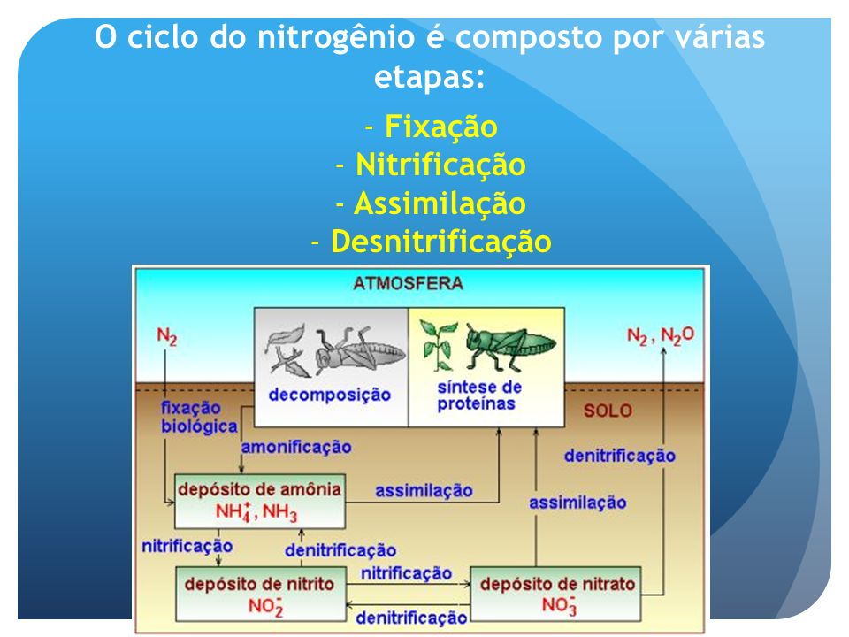 O ciclo do nitrogênio é composto por várias etapas: - Fixação - Nitrificação - Assimilação - Desnitrificação